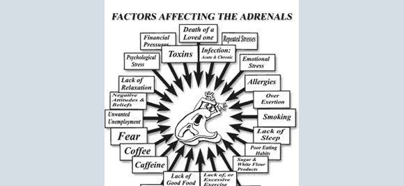 Andrenal-Stress-Test