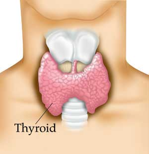 thyroid health Calgary